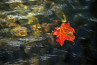 NWA Democrat-Gazette/MICHAEL WOODS &bull; @NWAMICHAELW<br /> Sunlight reflects in the water as it runs over a fallen leaf floating along Scull Creek at Wilson Park in Fayetteville Wednesday November 4, 2015.