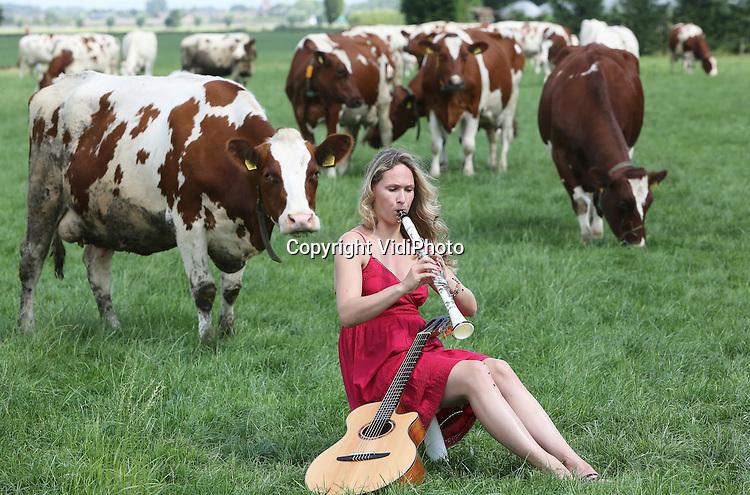 Foto: VidiPhoto<br /> <br /> DODEWAARD - Een wonderlijk tafereel woensdag tussen de melkkoeien van veehouder Jan-Willem van Rooijen in Dodewaard. Kunstmusicus Rineke de Wit uit Amersfoort mocht diverse muziekinstrumenten in de wei uittesten om te zien wat haar klassieke klanken voor effect hadden op de koeien. De dieren waren enorm ge&iuml;nteresseerd, hoewel bij een enkele valse noot luid boegeroep klonk. Van Rooijen, die in de stal populaire radiomuziek gebruikt om de dieren te kalmeren, was benieuwd of het klassieke repertoire van Rineke eveneens zorgt voor het ontstressen van de 170 melkkoeien. Minder stress is meer melk. De bekende Amersfoorste artieste komt zelf uit een agrarisch nest en wil nieuwe idee&euml;n opdoen voor haar muziek in de natuur en het agrarisch bedrijfsleven. Zelf bespeelt ze vijf instrumenten, is ze dirigent en arrangeert ze muziek. Klanken vanuit de natuur wil ze verwerken in haar nieuwe repertoire of inbrengen in al bestaande muziek.