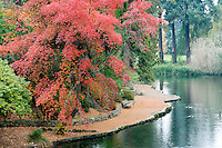 Fall color with pond. Crystal Springs Rhododendron Gardens. Portland, Oregon