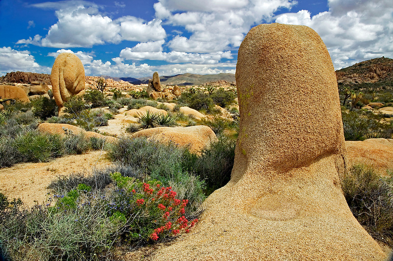 Indian paintbrush and rocks in Joshua Tree National Park, California
