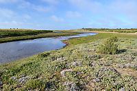 Saltmarsh at Holme Nature Reserve, Norfolk