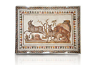 Picture of a Roman mosaics design depicting a lion attacking two onagers or Asiatic wild ass, from the ancient Roman city of Thysdrus. 3rd century AD. El Djem Archaeological Museum, El Djem, Tunisia. Against a white background