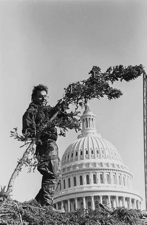 Rick Prince, of the office of the Architect of the Capitol tree division, lifts one of the many limbs which will be used to fill in the National Christmas tree once its placed in the ground. Minnesota provided a 62ft white spruce. He's actually standing on the still laying on the flat bed Christmas tree on Nov. 1, 1992. (Photo by Maureen Keating/CQ Roll Call via Getty Images)