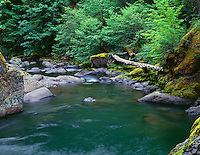 ORCAC_031 - USA, Oregon, Willamette National Forest, Middle Santiam Wilderness, Deep, green pool on Middle Santiam River and surrounding lush vegetation.