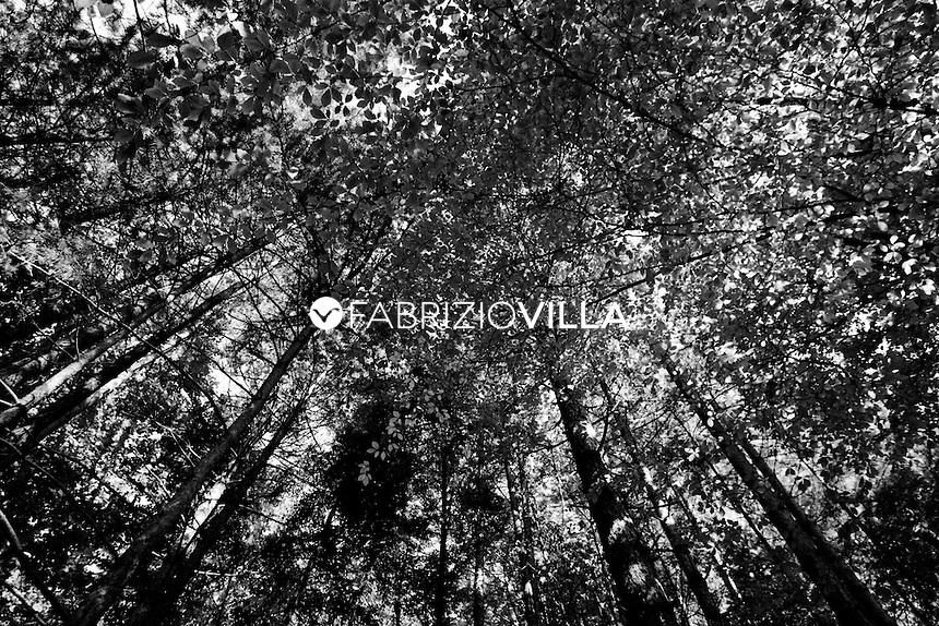 """Serra San Bruno (Vibo Valentia). La trasformazione della legna in carbone vanta una tradizione secolare nei boschi serresi. Qui, i carbonai raccolgono legna di """"Ilice"""" (Leccio), la riducono in pezzi di varia misura e con grande maestria allestiscono la """"carbonaia"""" nella """"piazza"""" (radure nel bosco che vengono preventivamente preparate allo scopo). Una volta completata, la carbonaia viene ricoperta di foglie secche e da uno strato di terra, trattenuto con intrecci flessibili, rametti e puntelli in legno. La combustione si avvia con tizzoni ardenti introdotti in uno stretto cunicolo verticale che sbocca all'apice della carbonaia. A questo punto, per giorni, fino a un'intera settimana, i carbonai devo ininterrottamente vigilare sulla combustione, per evitare che questa sia troppo veloce e pregiudichi l'intero lavoro. Alla fine, ogni carbonaia può produrre da venti a cento quintali di carbone vegetale, che una volta raffreddato viene raccolto in sacchi per la vendita. Foto Fabrizio Villa"""