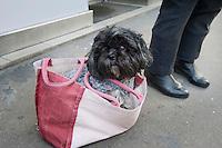 Frankrijk, Parijs, 30 jan 2010.Hondje in tas op bushalte..Foto (c)  Michiel Wijnbergh