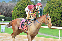 HOT SPRINGS, AR - FEBRUARY 19: Rated R Superstar with jockey Channing Hill cooling down after the Razorback Handicap  at Oaklawn Park on February 19, 2018 in Hot Springs, Arkansas. (Photo by Ted McClenning/Eclipse Sportswire/Getty Images)