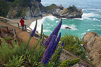 McWay Falls, Julia Pfeiffer Burns State Park. Big Sur Coast, California.  MR