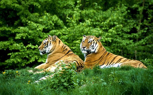 fauna in asia India constituye una parte importante de la indomalaya zona biogeográfica y muchas de las formas de flora y fauna muestran afinidades  su origen en asia.