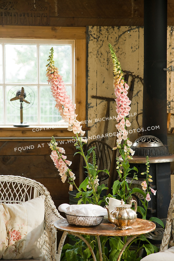 Df017442 Garden Shed Table Stock Photo Jpg
