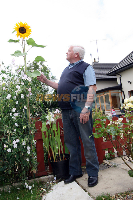 Peter James with his giant sunflower..Photo NEWSFILE/Jenny Matthews.(Photo credit should read Jenny Matthews/NEWSFILE)....This Picture has been sent you under the condtions enclosed by:.Newsfile Ltd..The Studio,.Millmount Abbey,.Drogheda,.Co Meath..Ireland..Tel: +353(0)41-9871240.Fax: +353(0)41-9871260.GSM: +353(0)86-2500958.email: pictures@newsfile.ie.www.newsfile.ie.FTP: 193.120.102.198.