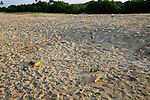 Plastic bottles litter on sandy beach, Nilavelli beach, Trincomalee, Sri Lanka, Asia