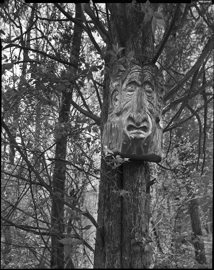 """The Ent of Kickapoo""<br />
