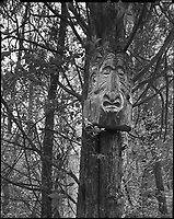 &quot;The Ent of Kickapoo&quot;<br />