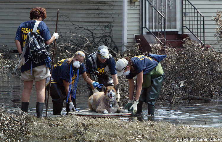 A dog is rescued and floated down Banks St on a makeshift raft by volunteers from Pasadsos Safe Haven save animals after Hurricane Katrina destroyed New Orleans in 2005. © Karen Ducey