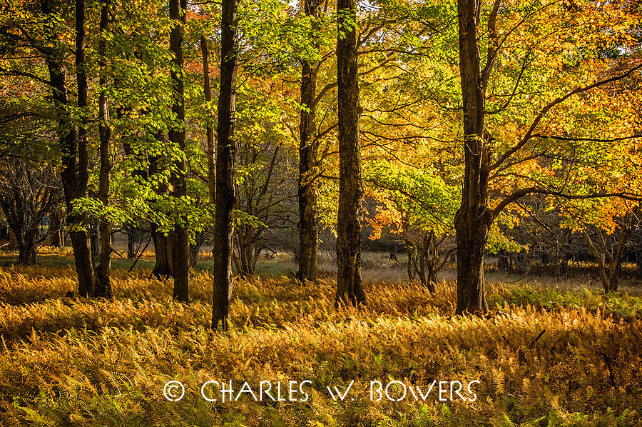 Tucker County woods lights up when the morning sun arrives.<br />