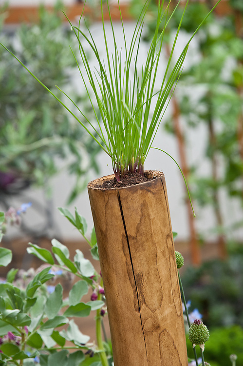 Chives planted in the top of hollow bamboo posts, 'The Potential Feast' garden designed by Raine Clarke-Wills & Fiona Godman-Dorington at the RHS Hampton Court Flower Show 2011.