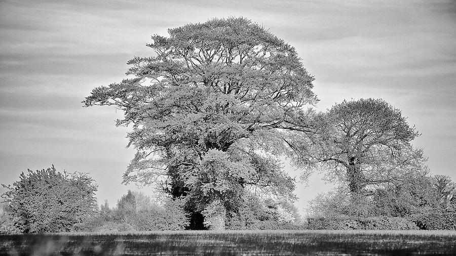 Tree On Le Mont de la Roserie, Jersey.