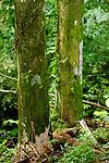Ñeques / Parque Nacional Camino de Cruces, Panamá.<br /> <br /> Edición limitada de 10 / Víctor Santamaría