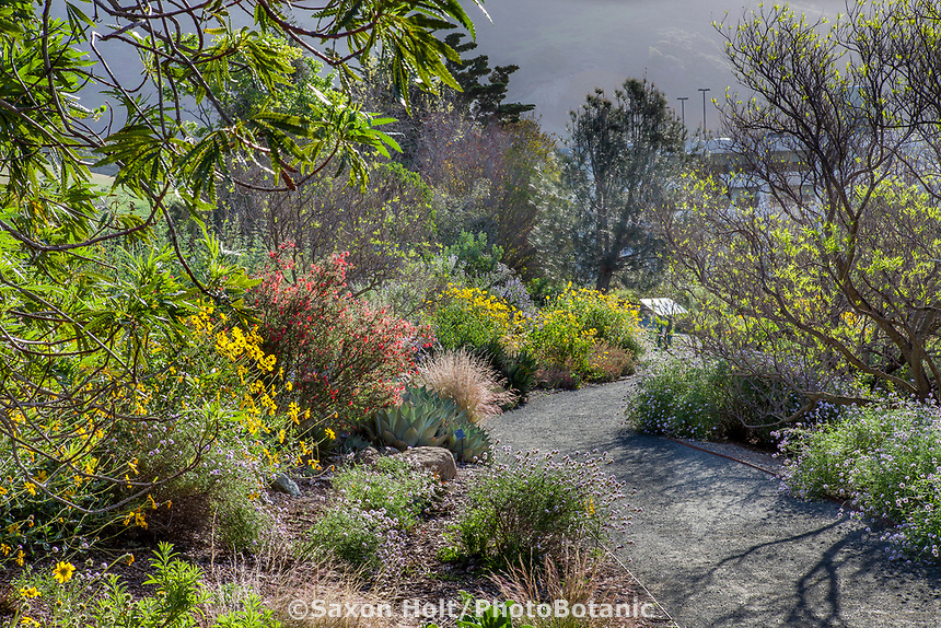 Pathway through California native plant garden at Leaning Pine Arboretum, California garden