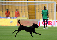 BOGOTA -COLOMBIA, 15-ENERO-2015.Un perro ingresa al campo de juego durante el partido entre el Deportivo Pereira  con  el Union Magdalena , partido de los Cuadrangulares de Ascenso Aguila jugado en el estadio Nemesio Camacho El Campin ./ A dog enters the field of play during the match between Deportivo Pereira with Union Magdalena, party Cuadrangulares de Ascenso Aguila t played at the stadium Nemesio Camacho El Campin. Photo / VizzorImage / Felipe Caicedo  / Staff