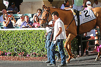HALLANDALE BEACH, FL - FEBRUARY 11:  Almanaar (GB) #2 heads to the walking ring before winning the Gulfstream Park Turf Handicap G1 at Gulfstream Park on February 11, 2017 in Hallandale Beach, Florida. (Photo by Liz Lamont/Eclipse Sportswire/Getty Images)