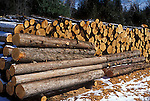 Eastern white cedar logs<br />