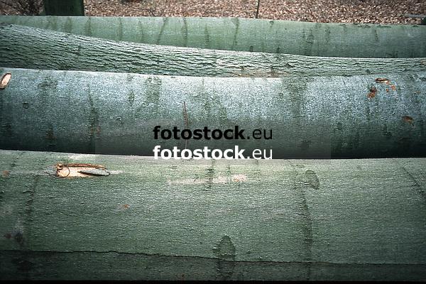 trunks of cutted of beeches<br /> <br /> troncos de hayas cortadas<br /> <br /> Baumst&auml;mme gef&auml;llter Buchen<br /> <br /> Original: 35 mm slide transparancy
