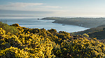 A photo walk along the coastal path, starting at Headon Warren with views back to Colwell Bay. Heading out to see the famous Needles Lighthouse, and finally back past the cows grazing at Warren Farm.