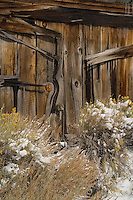 Fine art western landscape and western abstraact of detail of brown, weathered wooden side of building with yellow flowers of rabbitbrush dusted with snow in foreground, located in the historic ghost town of Bodie, northern California, east of the Sierras.