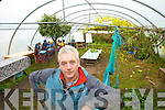 ORGANIC: Ian McGrigor pictured in one of the poly tunnels at Gortbrack Organic Farm on Saturday. ..   Copyright Kerry's Eye 2008