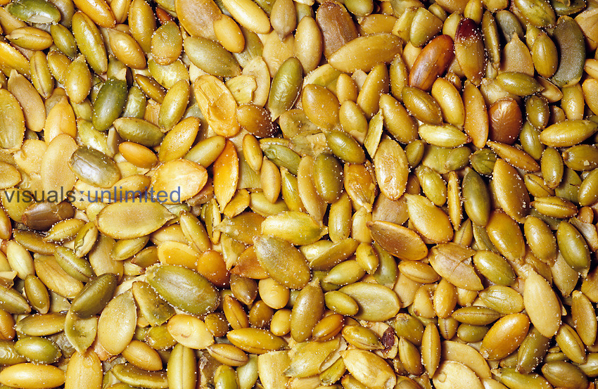 Roasted Pumpkin seeds or Pepitas (Curcurbita). Native to North and Central America.
