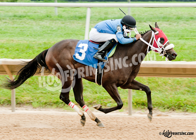 It's My Business winning at Delaware Park on 8/10/13