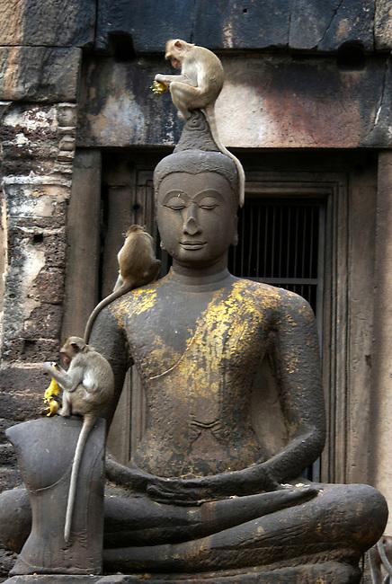 Monkey on Buddha statue Lop Buri