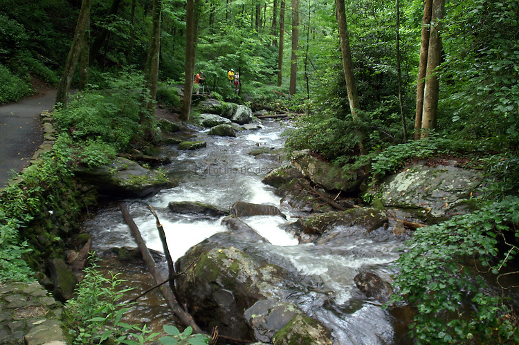 The trail along Smith Creek leading to Anna Ruby Falls provides spectacular views of the creek.  The trail has been paved to provide easy access.