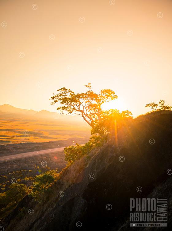 Sunrise over Pu'u Huluhulu Native Tree Sanctuary along Saddle Road, Hawai'i Island.