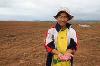 ANGOLA Malanje Black Stone Farm, a 20.000 hectare farm of chinese company CITIC construction corporation and angolian agency Gesterra which promotes large scale farms in Angola, chinese migrant worker, from Urumqi Xinjiang province, with Monsanto hybrid maize for seeding / ANGOLA Malanje Black Stone Farm, eine 20.000 Hektar grosse Farm der chinesischen Firma CITIC construction corporation und der angolanischen Agentur Gesterra, die den Ausbau von Grossfarmen in Angola foerdert, Chinesischer Vertragsarbeiter, stammt aus Urumqi Xinjiang, mit Monsanto Dekalb Mais fuer die Aussaat