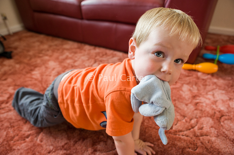 A toddler crawling on the living room carpet  whilst carrying a cloth rabbit in his mouth...09/07/2011.Hampshire, England, UK