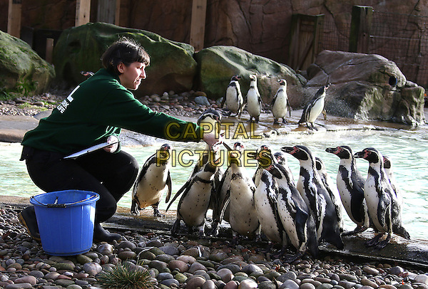 ZSL London Zoo&rsquo;s annual stocktake on 4th January 2016 in London, England.<br /> CAP/BC/PP<br /> Brett Cove/PP/Capital Pictures