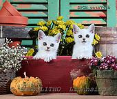 Xavier, ANIMALS, cats, photos+++++,SPCHCATS741B,#a# Katzen, gatos