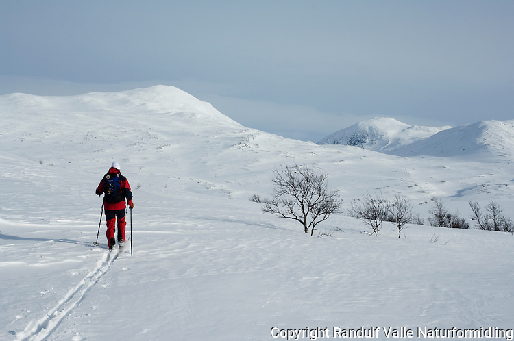 Jente går på ski en gnistrende vinterdag ---- Girl skiing a sunny winter day