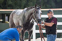 HALLANDALE BEACH, FL - JANUARY 27: Arrogate, assistant trainer Jimmie Barnes and groom Eduardo Luna in the wash rack at Gulfstream Park. (Photo by Arron Haggart/Eclipse Sportswire/Getty Images