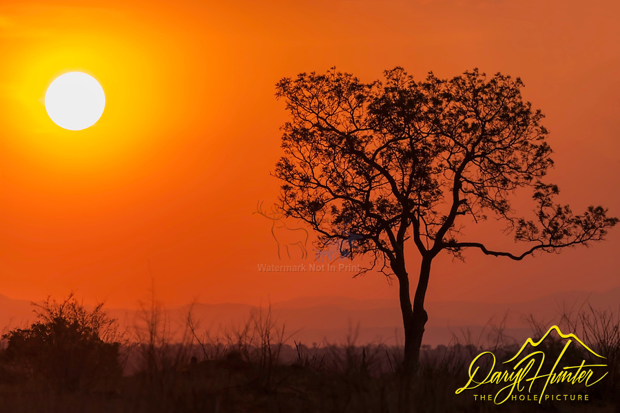 Tree, sunset, Kruger National Park