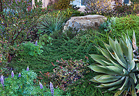 San Diego California Native Plant Gardens