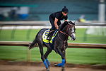 LOUISVILLE, KENTUCKY - MAY 02: Roadster prepares for the Kentucky Derby at Churchill Downs in Louisville, Kentucky on May 01, 2019. Evers/Eclipse Sportswire/CSM