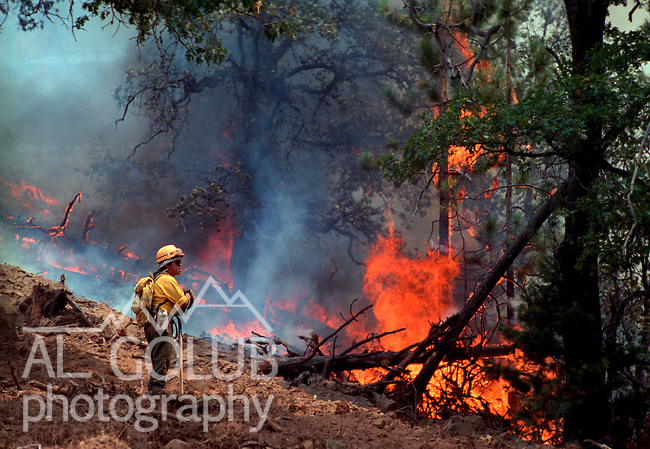 August 11, 1990 Yosemite National Park  --  A-Rock (Arch Rock) Fire  -- Firefighter Andy Bennett from Fort Apache, Arizona watches the fire line at Dry Gulch in Yosemite National Park. The Arch Rock Fire burned over 16,000 acres of Yosemite National Park and the Stanislaus National Forest.  At the same time across the Merced River, the Steamboat Fire burned over 5,000 acres of both Yosemite National Park and the Sierra National Forest.