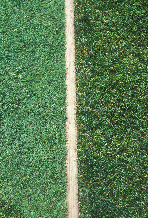 Creeping bentgrass 'Penncross' with Perennial Ryegrass 'Accolade' lawn pasture grasses compared side by side