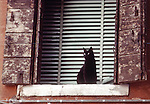 Cat with Blinds