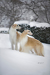 Borzoi pair in the snow Shopping cart has 3 Tabs:<br />