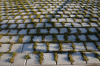 Grass growing through paving stones, HamburgGermany